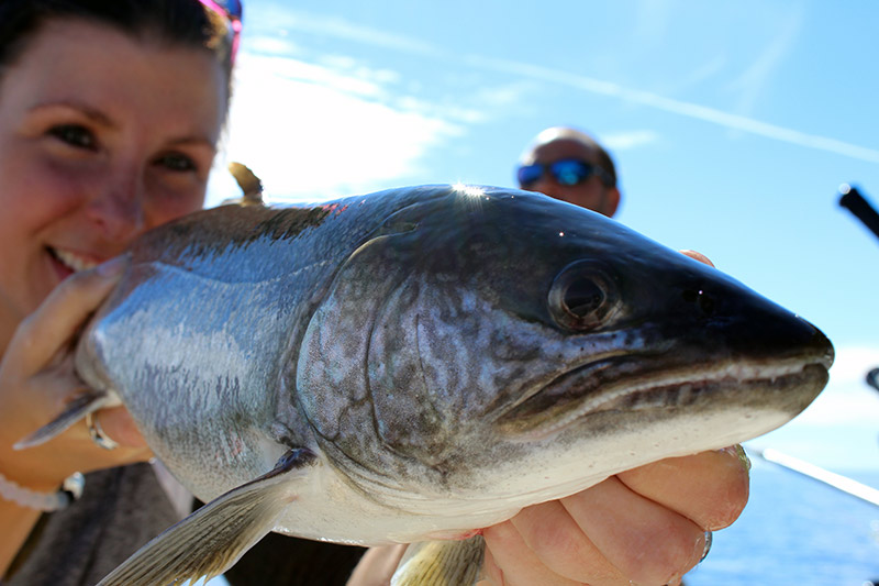 Home optimum charters for Fish in lake superior